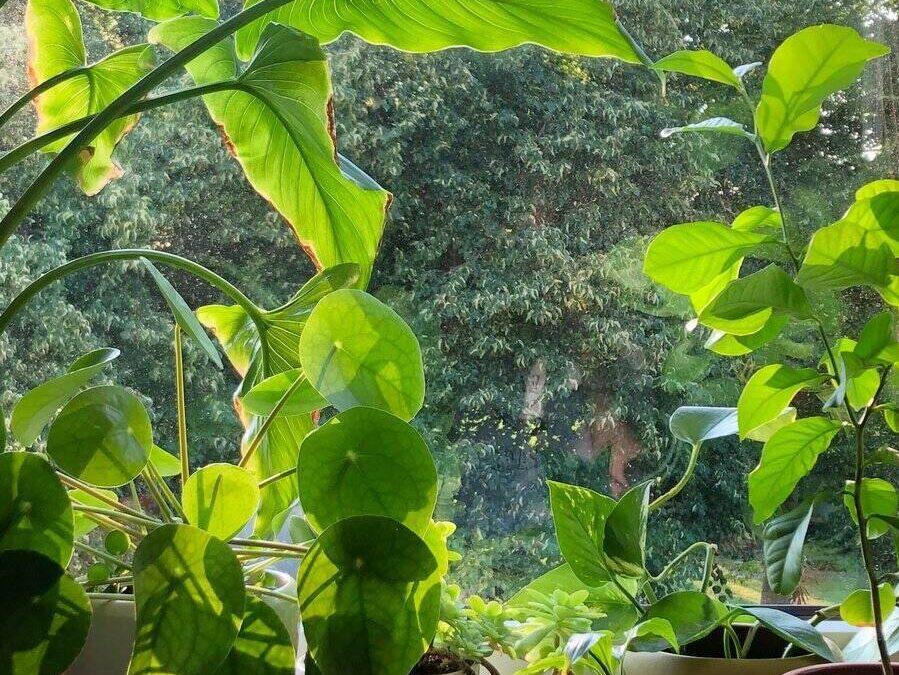 Pflanzen, die in jeder WG überleben