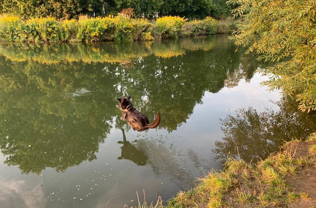 Mit Hund in Hildesheim- Ein persönlicher Kommentar